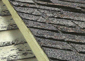 Roof shingle, sheathing, and siding decay