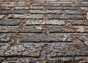 Missing, cracked, or curling shingles